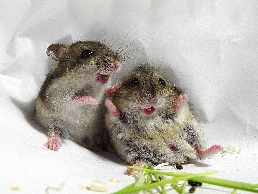 мышки фото смешные