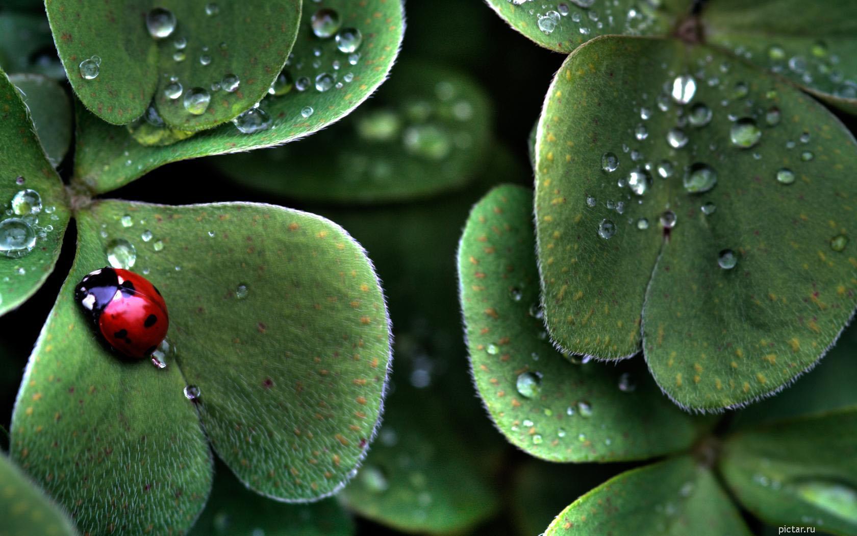 for Immagini sfondo natura