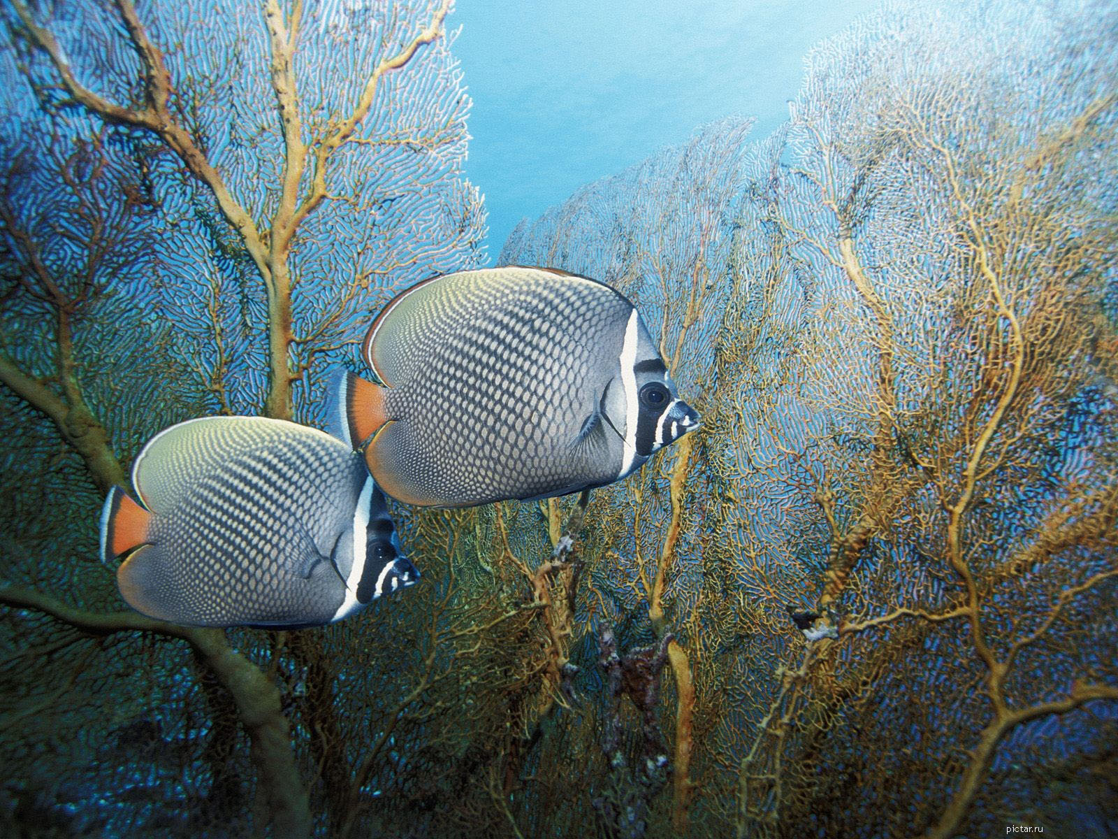 Слова две рыбки плоские рыбки рыбки в