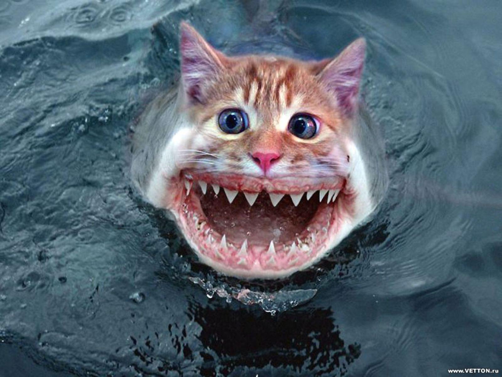 Картинка кот заглядывает - 9ba0b