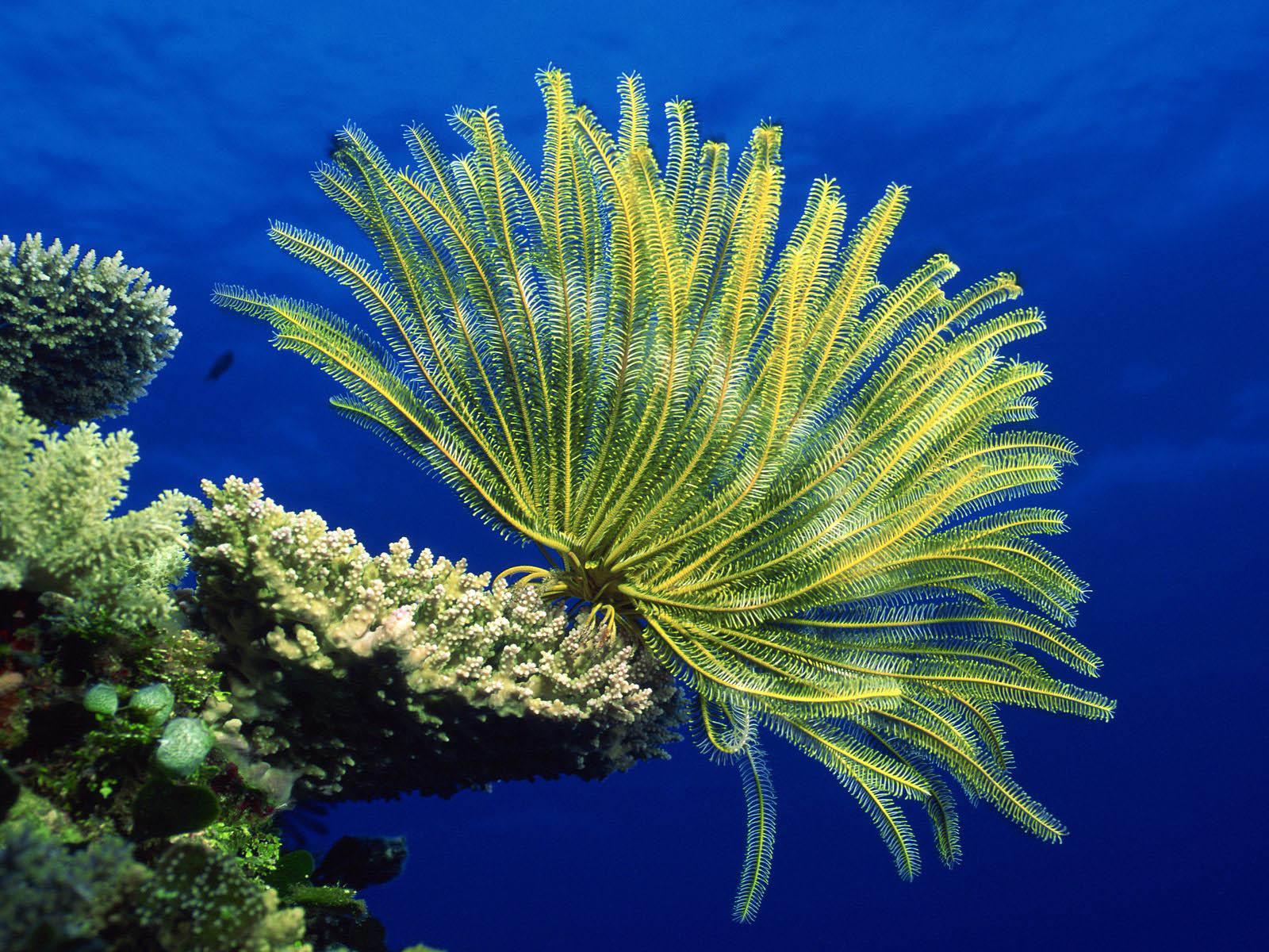 Real ocean plants