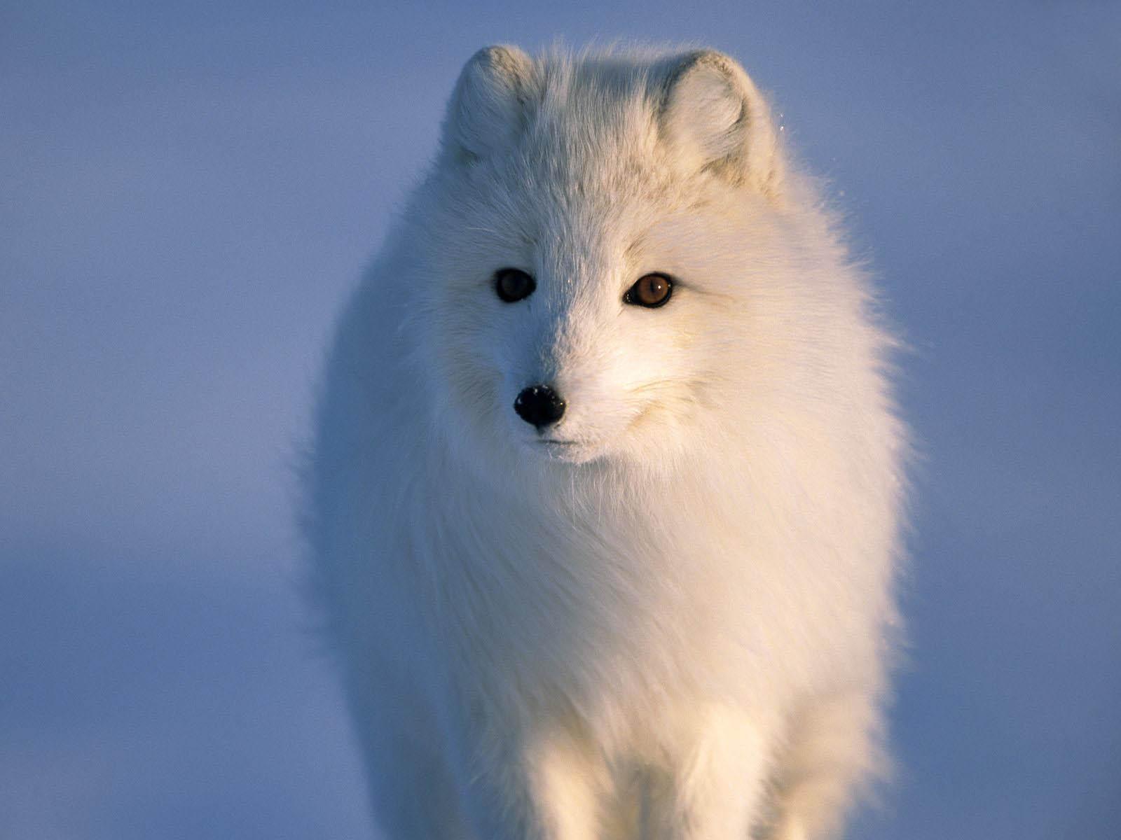 Картинка Белая собака картинка - Картинки Разные ...