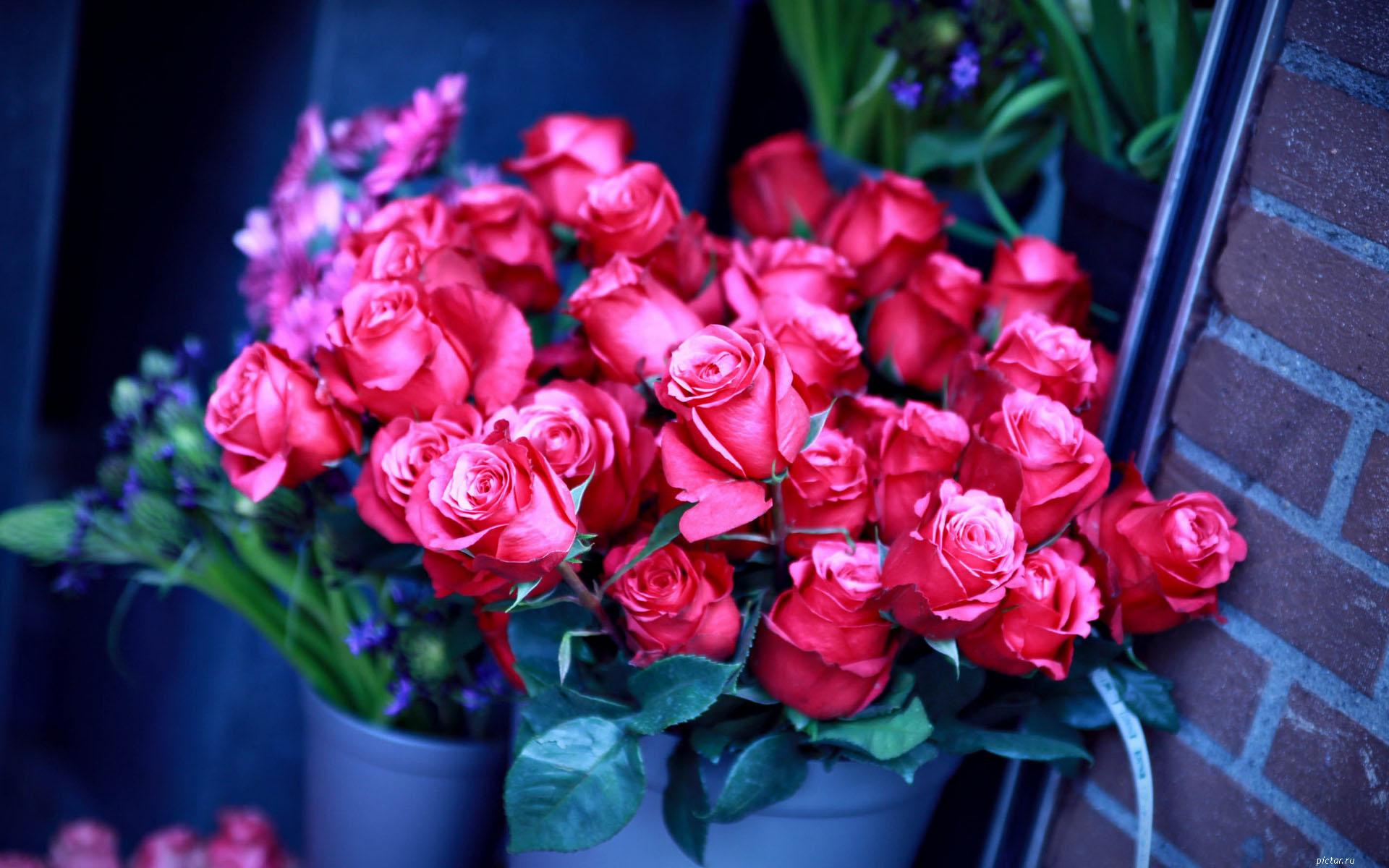 Картинка с розами для девушки