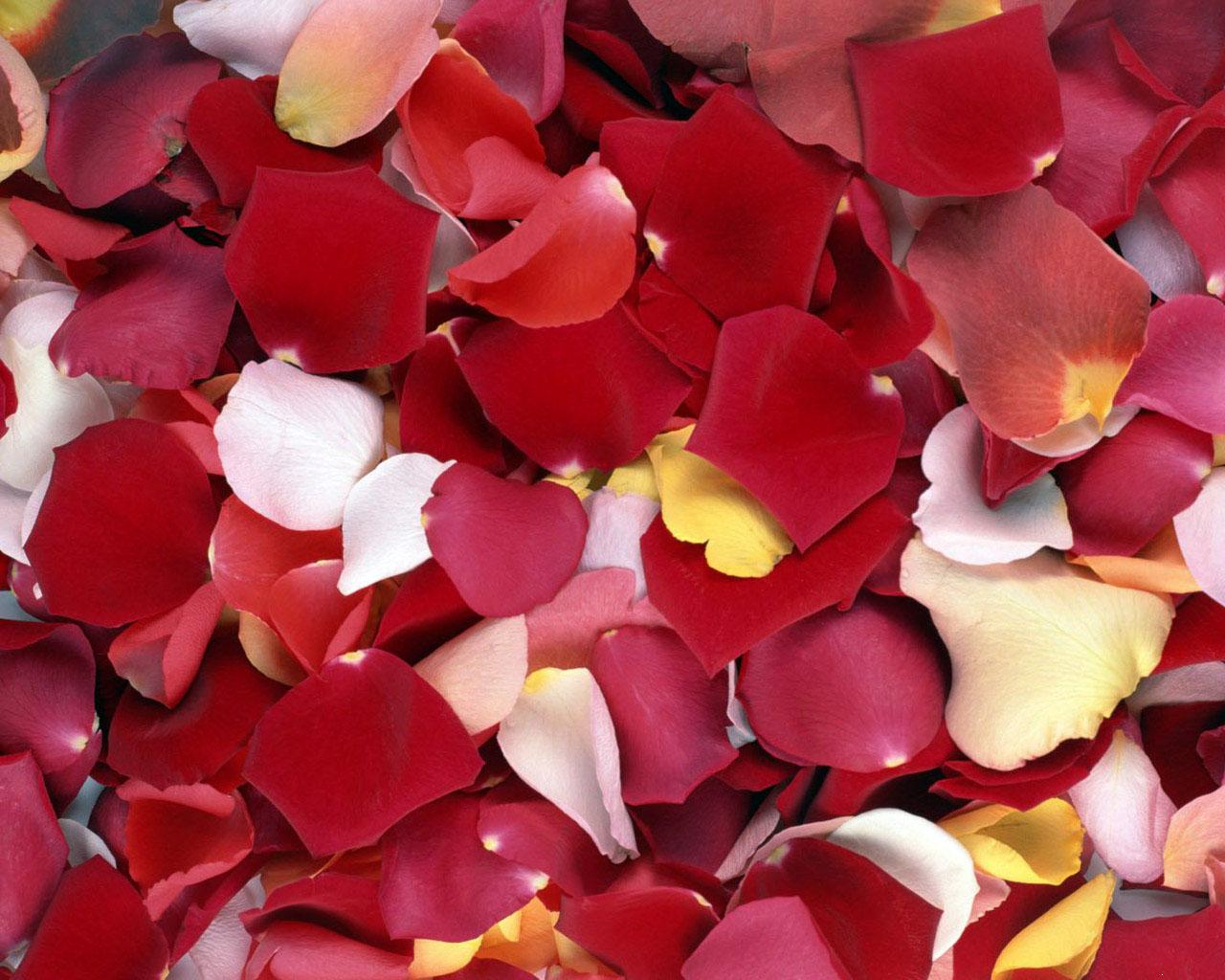 Как сделать розовые лепестки 565
