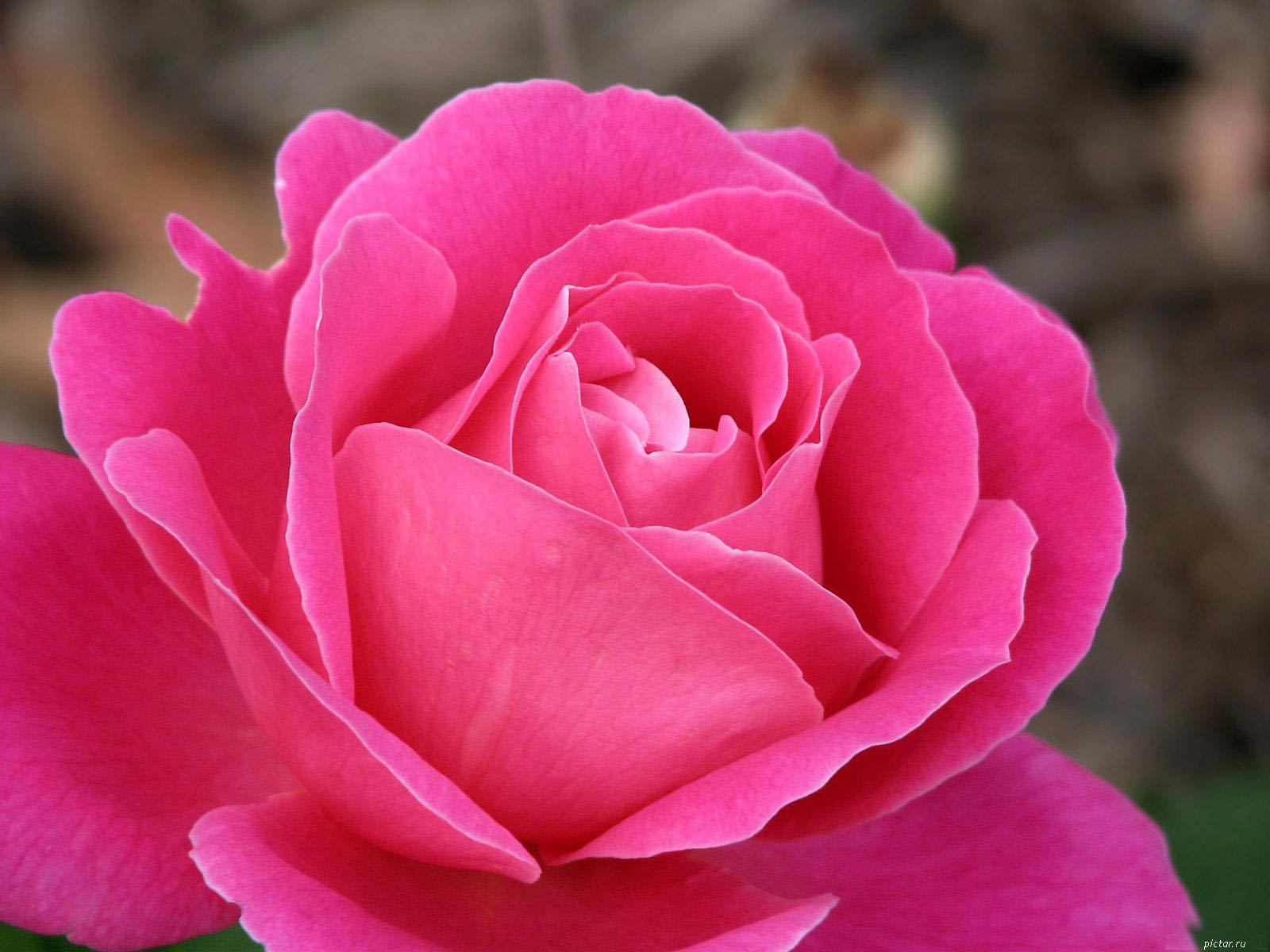 розовые аватарки: