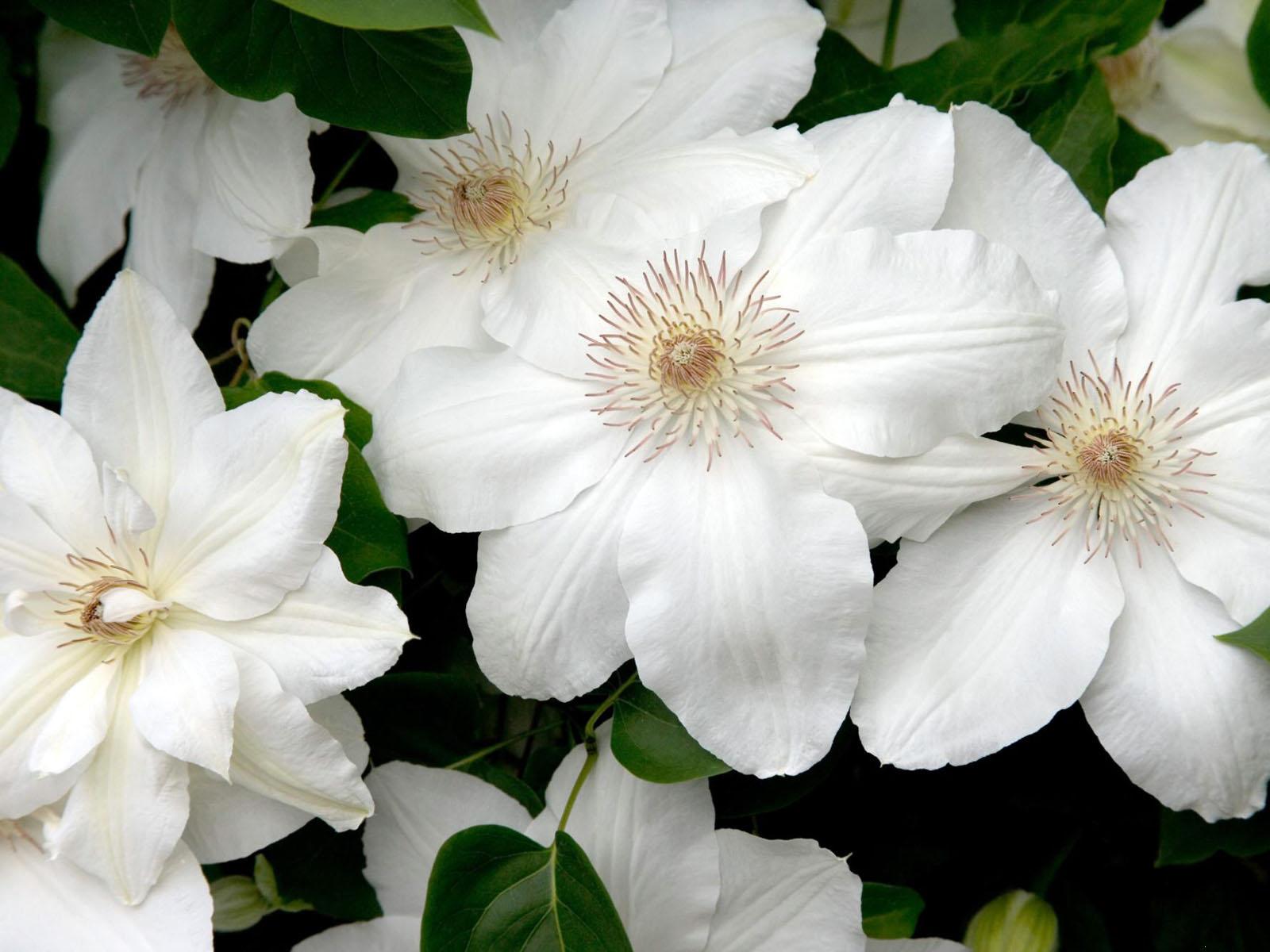 http://pictar.ru/data/media/56/flowers487.jpg