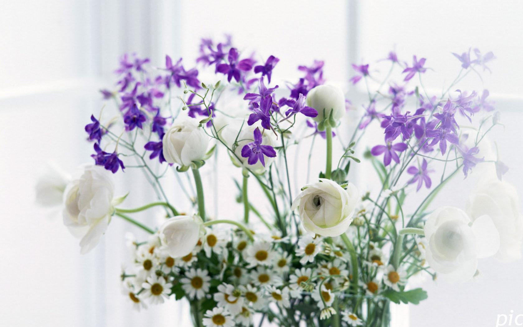 Бесплатные обои на рабочий стол скачать бесплатно полевые цветы 17