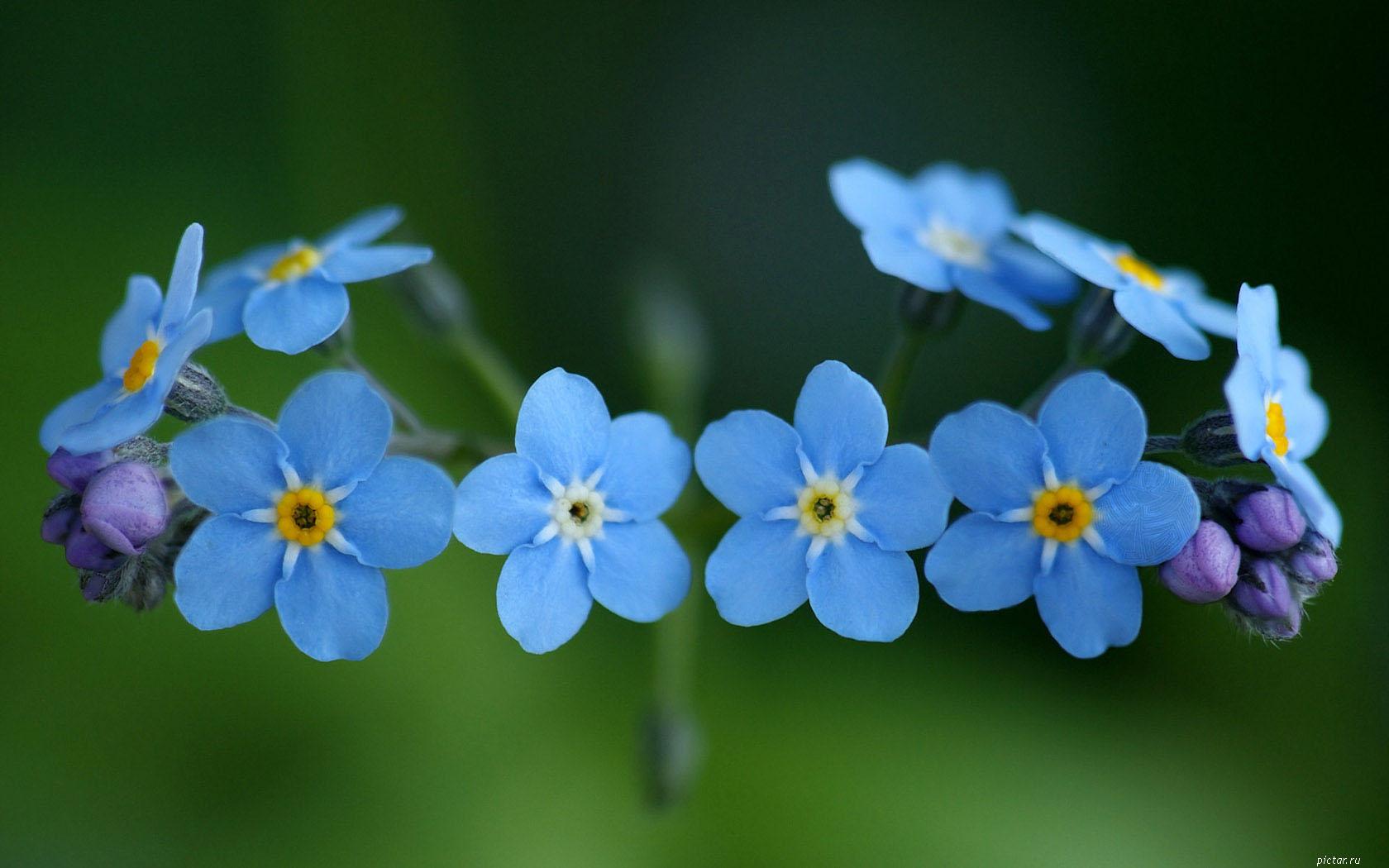 случайная картинка картинки ...: pictar.ru/img-flowers862-21594.htm
