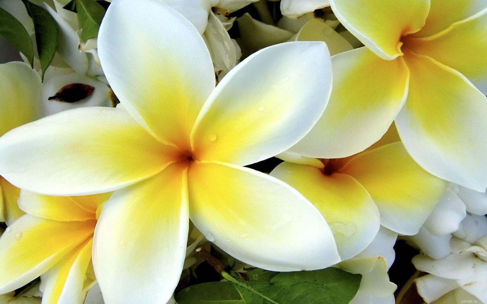 Картинки белые красивые цветы