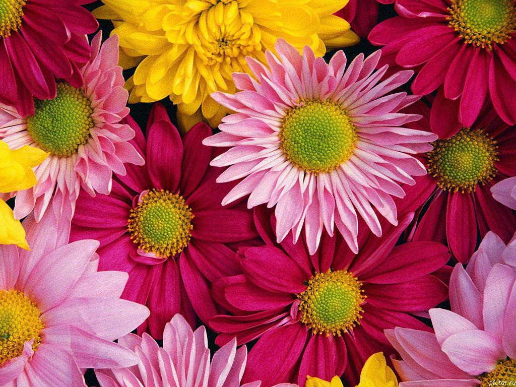 фото яркие цветы