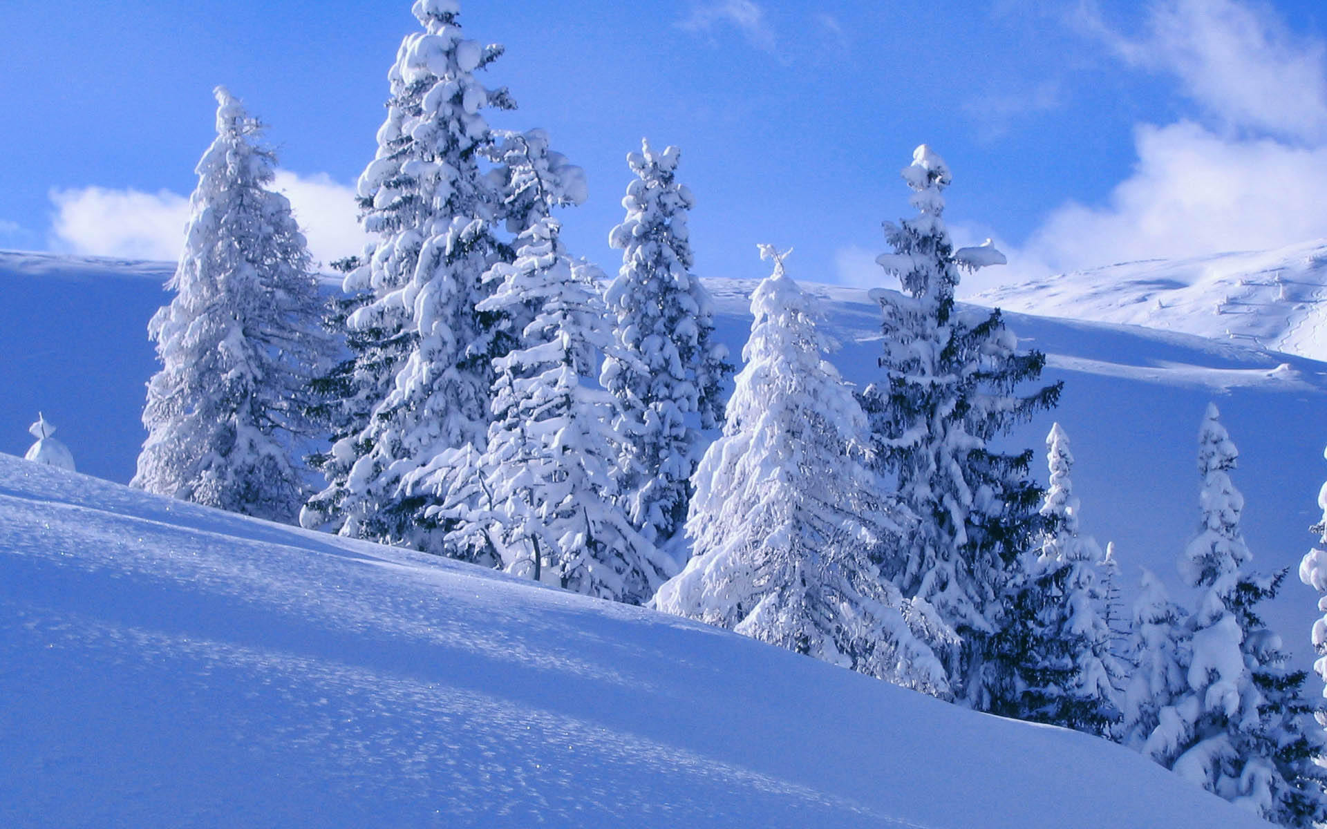 Картинка зимний пейзаж с деревьями