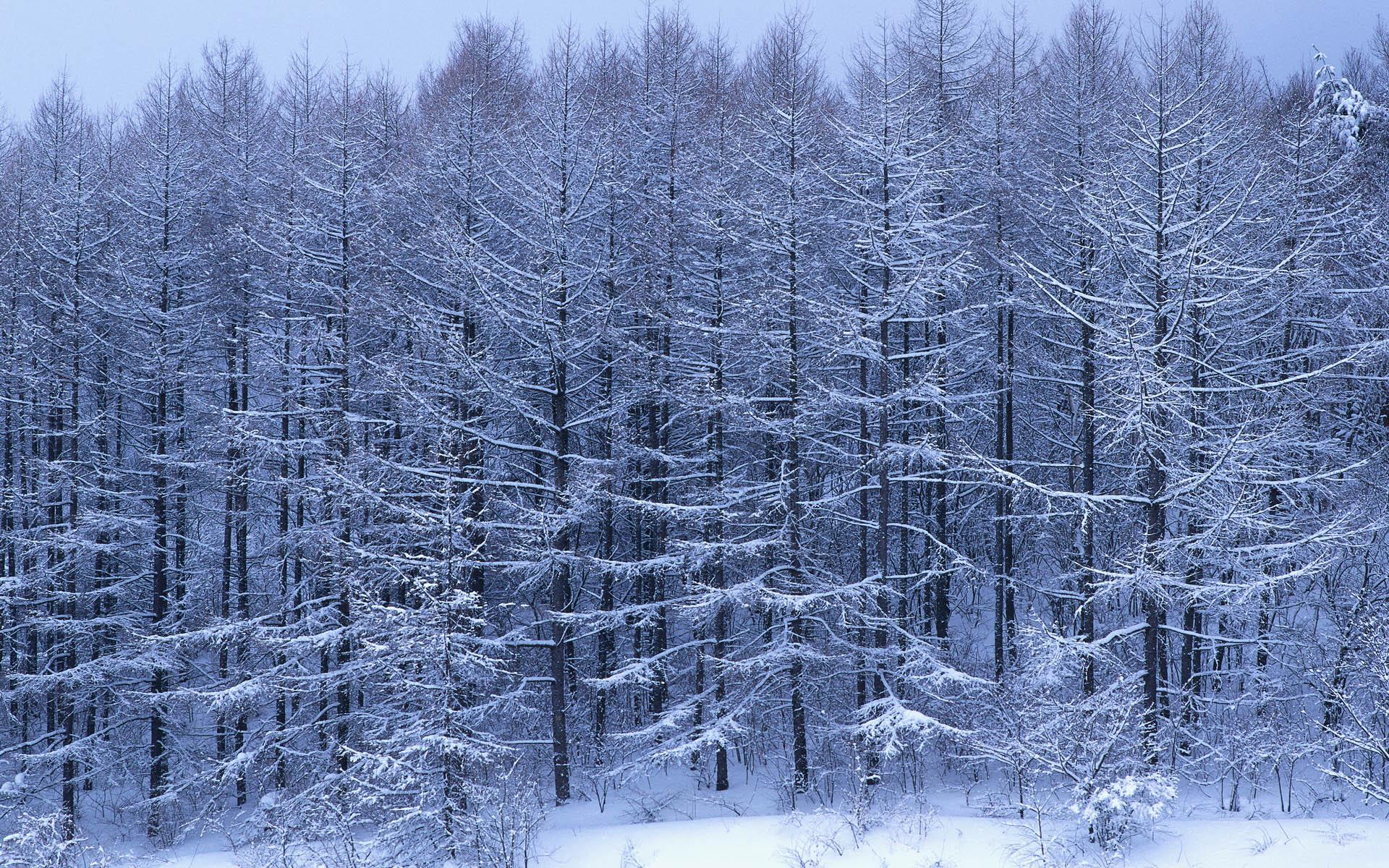 Зимний лес зимой картинки зима