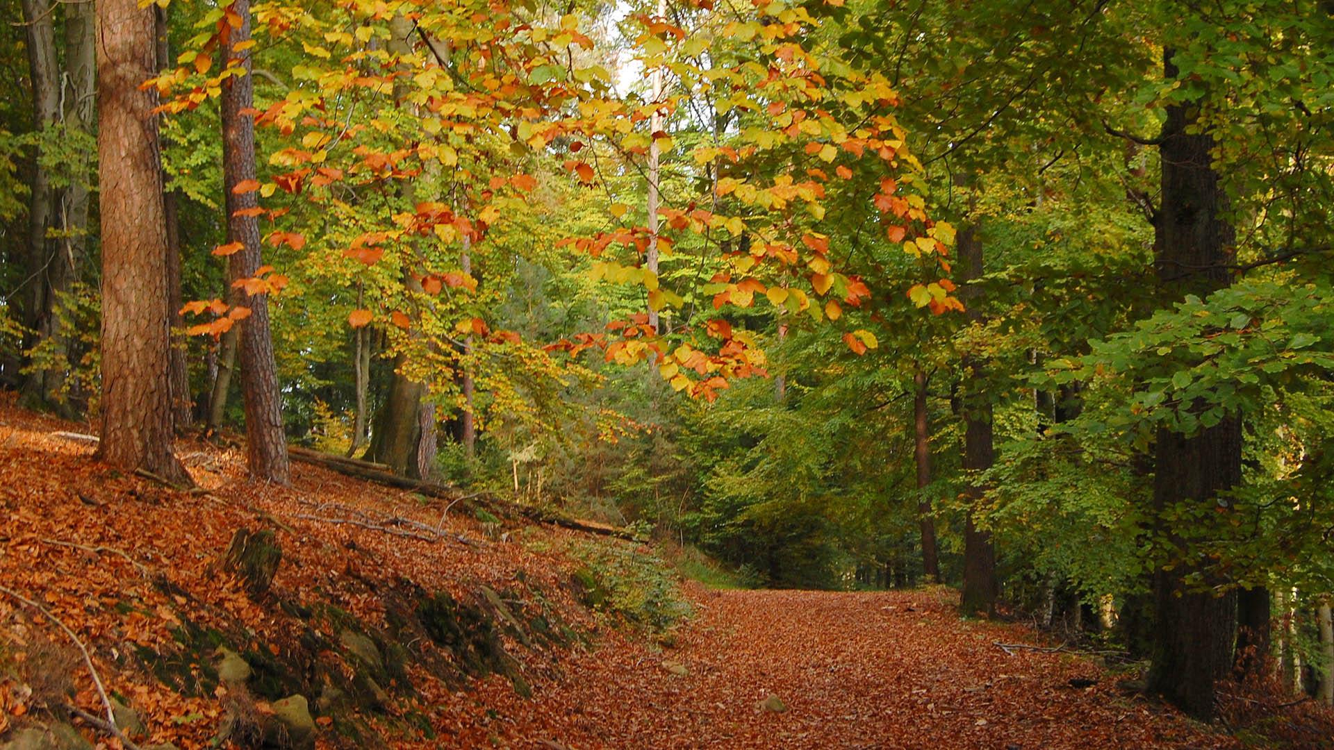Картинка осенний лес - d