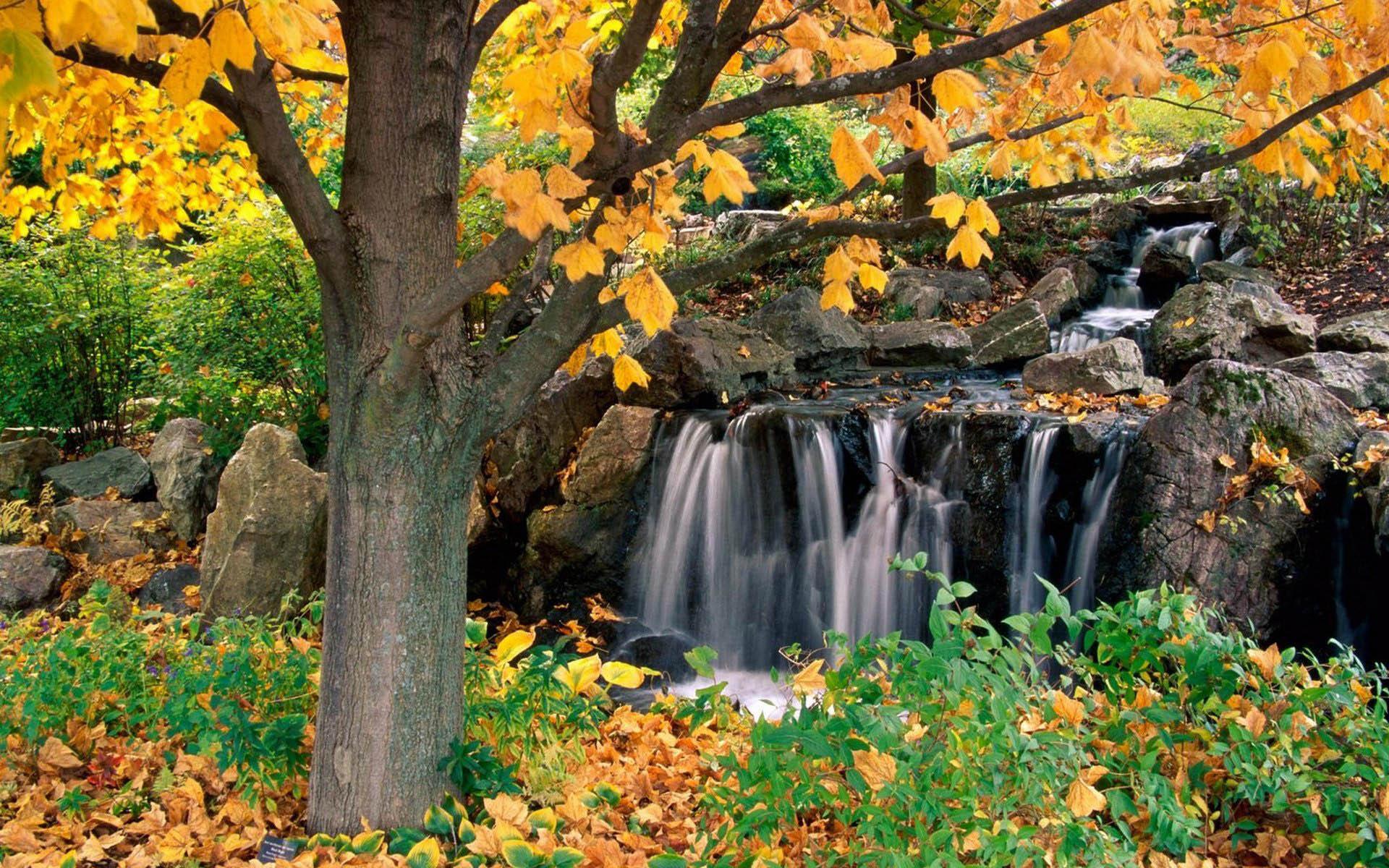 Картинка водопад в лесу - Картинки Осень - Бесплатные ...