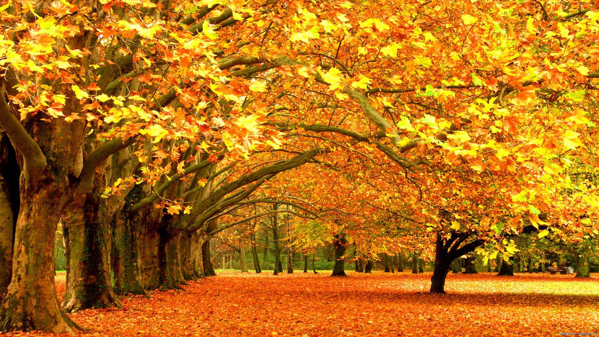 скачать картинки на рабочий стол золотая осень